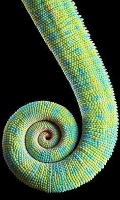 earthly-essence:Lizard tail.