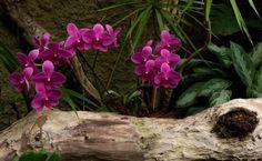 Espaços para Orquídeas Espaços para sua coleção de orquídeas! As pessoas que apreciam orquídeas podem cultivar estas belas plantas em pequenos espaços, como em varandas e sacadas. É necessária boa luminosidade, mas sem sol direto. Ventos...