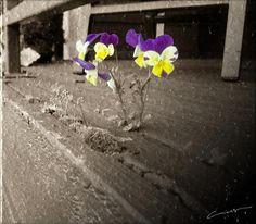Flowers in Ashen Light Digital Art By Michael Hurwitz