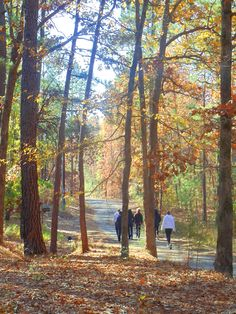 Fall travel.  Getaway to East Texas! Join us October 10-12 for a Women's Yoga Retreat. $299 Special Price