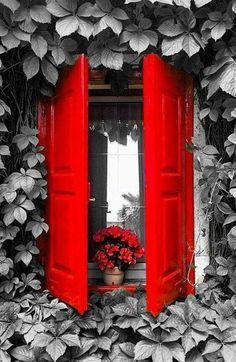 splash of color Splash Photography, Color Photography, Black And White Photography, Black White Red, Red And Grey, Color Splash, Red Color, Color Pop, Red Aesthetic