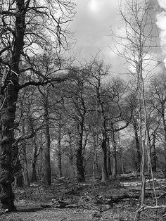 Ashenbank woods Cobham Kent