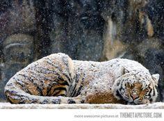 Happy cat getting snowed on