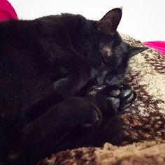 Good morning! 😴#mygreatcat #my_loving_pet #cat #gatto #catoftheday #catsofinstagram #catstagram #gatti #instacat #instacat_meows #bestmeow #topcatphoto #miao #catlover #gatto #catoftheday #katze #gato #chat #猫  #neko #猫好き #Exellent_Cats #子猫 #プッシーキャット #ニャー #甘い #愛猫