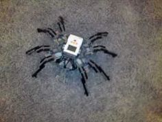 prototype PF/NXT-OMNISPIDER omnidirectional LEGO walking spider robot technic mindstorms