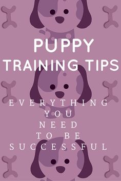 Puppy Training: Everything You Need to Properly Train Your Pet