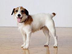 Frasier Crane's dog Eddie.