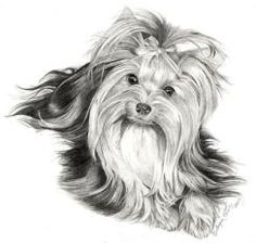 yorkie drawings | yorkie drawings - get domain pictures - getdomainvids.com