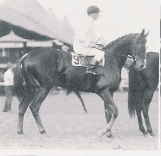 1915 Kentucky Derby winner, Regret (a filly)...there is no better name for a female, of any species