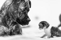 Javier Pardina Photography   B