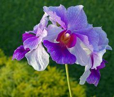 orchids | Sunshine and Orchids | Madang - Ples Bilong Mi