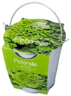 Pflanzset in Zinkeimer, Petersilie - Petersilie - wird frisch oder getrocknet zu einer Vielzahl von Speisen verwendet. Sehr hoher Vitamin C-Anteil. Legen Sie die Samen auf die Erde und bedecken Sie da