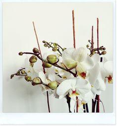 #Flow29jours défi photo - #fleur #flower #orchidée