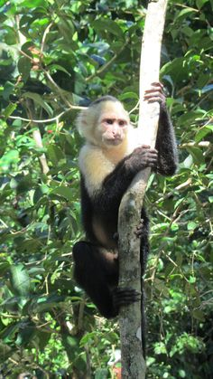 Costa Rica, Manuel antonio