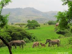 South Africa trip journal: Mlilwane Wildlife Sanctuary in Swaziland Trip Journal, World Travel Guide, Kruger National Park, Zebras, Plan Your Trip, Animals And Pets, Places To See, South Africa, Safari