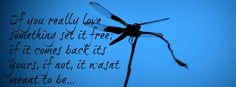 dragonfly quotes - Google Search