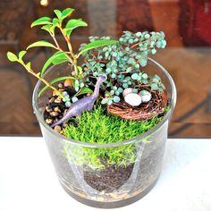 terrarium plants - Google Search