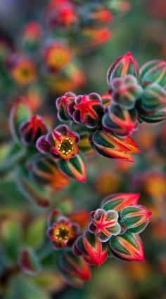 Echeveria by Maureen Bond Not hibiscus or plumeria but gorgeous just the same.