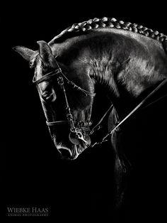 Photograph Atila by Wiebke Haas on 500px