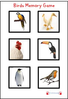 Free Printable Birds Memory Game.  Print out twice.  Cut out each picture and play Memory.