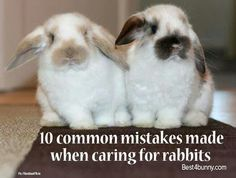 10 Common Mistakes made when caring for rabbits.
