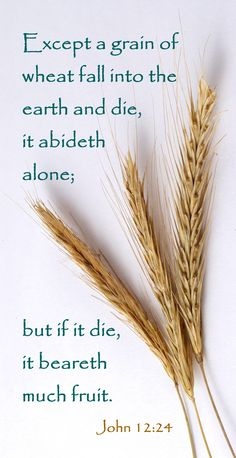 Verily, verily, I say unto you, Except a corn of wheat fall into the ground and die, it abideth alone: but if it die, it bringeth forth much fruit. (John 12:24) KJV