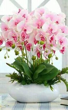 Clique e assista o vídeo. ——————————— Orquídea, orquidea, orquideas, or… – Orchidee Beautiful Rose Flowers, Exotic Flowers, Amazing Flowers, Silk Flowers, Orchid Flower Arrangements, Beautiful Flower Arrangements, Orchids Garden, Orchid Plants, Rosen Box
