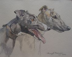 Greyhound watercolor study by Hazel Morgan, English contemporary portrait artist & dog painter