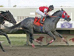City of Weston Upsets Gallant Bob Field America 2, North America, Four Horses, Horse Racing, Rally, Past, Count, Bob, City