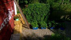 Vy över bärodlingen i trädgården på Strömsö. Garden, Plants, Garten, Lawn And Garden, Gardens, Plant, Gardening, Outdoor, Yard