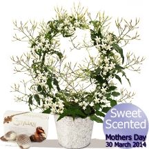 Mother's Day Flowers - Sweet Scented Jasmine & Chocolates Gifts Delivered, Mothers Day Flowers, Flowers Delivered, Chocolates, Jasmine, Bouquet, Sweet, Floral, Plants