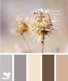 dried hues, I like the last color for the Living room walls, the browns are like our furniture, get some blue accents.