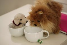 #cute #dogs #puppy #stuffed #animals #tea #cup #adorable