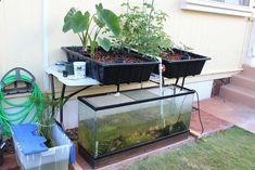 Small Aquaponics Setup