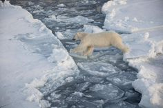 In 30 years we've lost 75 percent of the Arctic sea ice