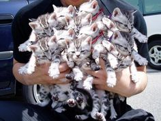 forget roses, send the one you love a bouquet of kitties (really), but they sure look cute!