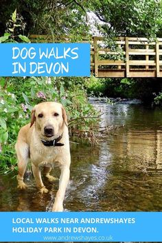 You will be spoilt for choice exploring in Devon with your dog,lovely walks along the South West Coast path, river walks or woodland walks are all nearby. Andrewshayes is a dog friendly holiday park. #dogwalks Dog Friendly Holidays, South West Coast Path, Best Pubs, Great Walks, Jurassic Coast, Pet Dogs, Pets, Holiday Park, Beach Walk
