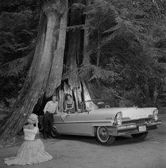 Hollow tree - Stanley park late 1950's (1957 Lincoln) Vintage Pictures, Old Pictures, Old Photos, Vintage Images, West Coast Canada, Most Beautiful Cities, Local History, Historical Pictures, Old City