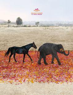 orange hermes et rose indien Equestrian Chic, Hermes Orange, Horse Fashion, Great Ads, Elephant Love, Hermes Paris, Horse Riding, Pet Birds, Cute Babies