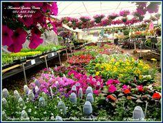 Beautiful Assortment Of Annuals At Fernwood Gardens, Columbia Tn  (931)388 3421