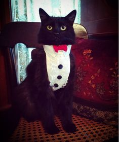 Black cats will ruin your formal family photos. | Let's Face It, You Just Can't Get A Black Cat