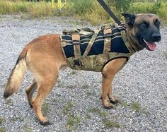 Haute couture autumn collection #Täsmä . The serious stabbing of Finnish Police K9 Börje put some pep in the process of getting proper vests to our Police K9.     #iupoliisi #iupoliisik9 #belgianmalinois #k9vest #dogsofinstagram #policedog #poliisikoira