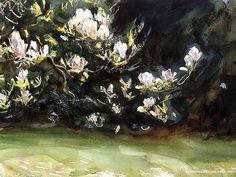 Magnolias - John Singer Sargent Paintings