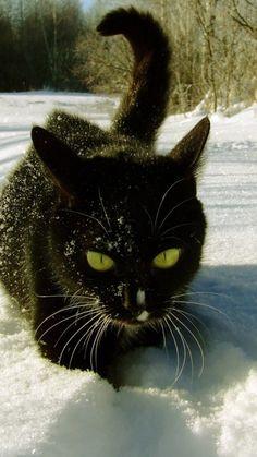 cat, snow, climbing, trails, winter