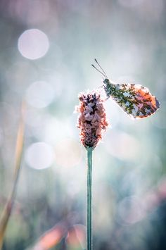 Fairy Aurore *  by BLOAS Meven, via 500px