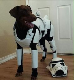 Find this Pin and more on animalitos by mercedesproa. See More. Stormtrooper Penny. Dog CostumesDiy ... & Stormtrooper Penny | DIY Dog Costumes | Pinterest | Diy dog costumes