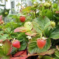 10 Easy Ways to Beat Weeds | Rodale's Organic Life