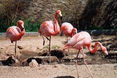 Aquellos zancos de la niñez… Zoo de Barcelona.