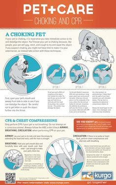 Pet Choking and CPR Infographic - 4 The Love of Animals Source: http://4theloveofanimals.com/blog/2014/06/11/pet-choking-cpr-infographic/ #petfirstaid