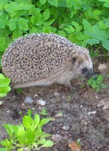 Science, Animals, Friends, Hedgehog, Amigos, Animales, Animaux, Animal, Animais